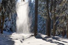 Schneestaubfall im Steineggwald oberhalb des Wenigerweihers. Oben taut es - unten stiebt es. (Bild: Franz Häusler)