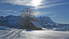 Die wärmende Februarsonne. (Bild: Walter Schmidt)