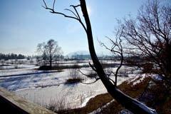 Stimmungsvolle Winter-Rietlandschaft bei Altstätten. (Bild: Ruedi Dörig)