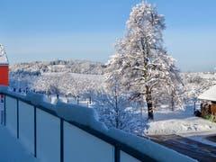 Winterliche Linde in Untereggen - einfach wunderschön. (Bild: Raymonde Graber)