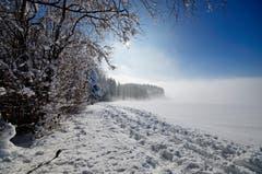 Der Blosenberg reichte grad aus, um über dem Nebel den Wintertag zu geniessen. (Bild: Marianne Schmid, Gunzwil, 6. Februar 2019)