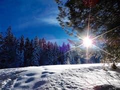 Zauberhafte Winterstimmung auf der Krienseregg. (Bild: Heinz Schürmann, Krienseregg, 6. Februar 2019)