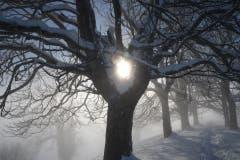 Winter wie im hohen Norden. Wunderbare Eindrücke rund um den St. Galler Freudenberg. (Bild: Daniel Locher)
