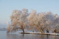 Die sonnedurchfluteten Bäume des Inselis im Villettepark nach dem sonntäglichen Schneefall. (Bild: Sonja Weber, Cham, 3. Februar 2019)