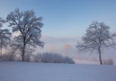 Ein eisig kalter Wintermorgen in Zuswil. (Bild: Priska Ziswiler-Heller, 4. Februar 2019)