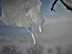 Das Tauwetter mit seinen wunderschönen Kunstwerken. Aufgenommen auf dem Golfplatz Meggen. (Bild: Margrith Imhof-Röthlin, Meggen, 5. Februar 2019)
