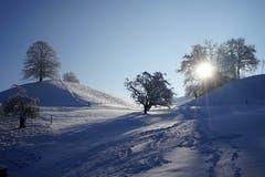 Spuren im Schnee auf der Stocki in Zell. (Bild: Isidor Rösch, 6. Februar 2019)