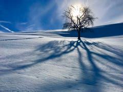 Herrliches Winterwetter im Ägerital. (Bild: Peter Bumbacher, Unterägeri, 8. Februar 2019)