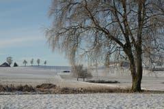 Den kalten aber schönen Morgen im Wauwiler Moos geniessen. (Bild: Irene Wanner, 8. Februar 2019)