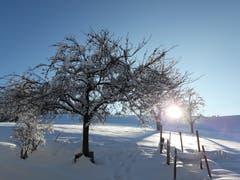 Ein Morgengruss vom Aernihof in Wolhusen. (Bild: Ursula Schmid, 5. Februar 2019)