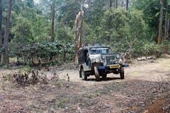 Die Jeeps fahren ihre Routen so, dass die Tiere nicht gestört werden. (Bild: Jaishankar T.M.)