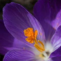 Frühling in Rotmonten. (Bild: Paolo Clerici)