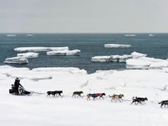 Die drittklassierte Jessie Royer mit ihrem Team auf dem letzten Teilstück nach Nome entlang dem Beringmeer (Bild: KEYSTONE/AP Anchorage Daily News/MARC LESTER)