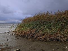 Sturm am Bodensee. (Bild: Toni Sieber)