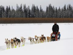 Iditarod-Musher Matt Hall unterwegs in Eagle Island (Bild: KEYSTONE/AP Anchorage Daily News/MARC LESTER)