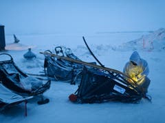 Musher Ramey Smyth muss in Unalakleet am mächtigen Yukon-Fluss seinen defekten Schlitten auswechseln (Bild: KEYSTONE/AP Anchorage Daily News/MARC LESTER)