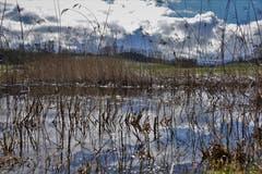 Überall steht Wasser auf den Wiesen. (Bild: Ledi Herzog, Willisau, 18. März 2019)