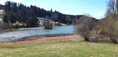 Frühlingserwachen am Wenigerweiher. (Bild: Klaus Businger)