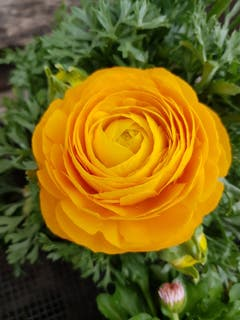 Sonnenschein in Form einer Blume. (Bild: Reto Schlegel)