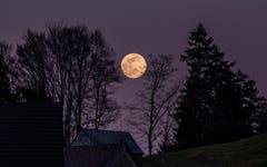 Der stille Mond beim Buchschachen Herisau. (Bild: Luciano Pau)
