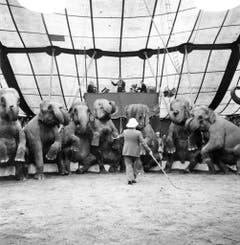 Rolf Knie senior führt im April 1945 in der Manege des Zirkus Knie eine Nummer mit Elefanten auf. (Bild: Keystone /Str)