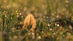Die Morgensonne lässt die Gräser glitzern. (Bild: Irene Wanner, Schötz, 24. März 2019)