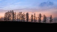 Abendstimmung bei Lutzenland in Herisau. (Bild: Luciano Pau)