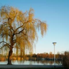 Abendstimmung am Bodensee, fotografiert in Kreuzlingen. (Bild: Thomas Ammann)