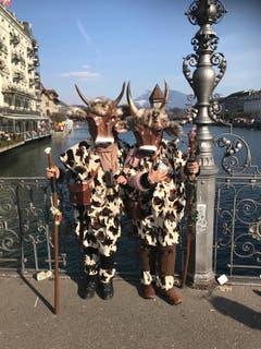 Zwei Kühe geniessen die Sonne an der Luzerner Fasnacht. (Bild: Leserin Gabrielle Delacroix)