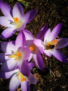 Frühling im Garten. (Bild: Anita Gross-Kern)