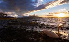 Sonnenuntergang am Zugersee. (Bild: Daniel Hegglin, Zug, 7. März 2019)