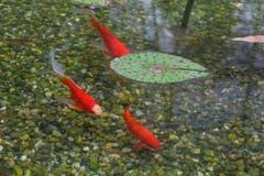 """Ein kleines bisschen """"Monet"""" im Botanischen Garten, aber wirklich nur ein kleines bisschen. (Bild: Franz Häusler)"""