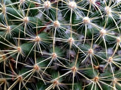 Symmetrie des Kaktus. (Bild: Toni Sieber)