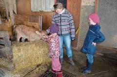 Die Mädchen bevorzugen die Tiere und streicheln und beobachten mit Dora Lenherr ausgiebig die Kälber und Kühe auf dem Hof.
