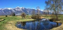 Frühling im Rheintal, aufgenommen in Ruggell. (Bild: Toni Sieber)