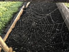 Die Spinnen sind auch schon aktiv. (Bild: Toni Sieber)