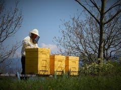 Nicht nur die Bienen sind fleissig, auch diese Imkerin hat momentan «Hochsaison» ! Aufgenommen auf dem Wanderweg zwischen Buonas und Cham. (Bild: Margrith Imhof-Röthlin, 18. April 2019)