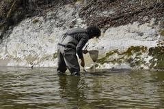 Roman Gerber schabt mit einer Abwaschbürste Material von der Felswand.