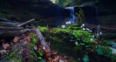 Blick auf den Wasserfall bei Birwinken. (Bild: Thomas Ammann)