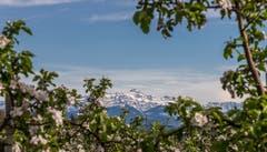 Säntis-Sicht von Berg TG aus. (Bild: Michael Eicher)
