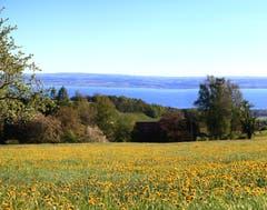 Frühling pur - Föhnstimmung und Frühlingsblumen im Waldpark, Heiden. (Bild: Fredy Zünd)