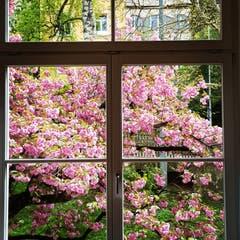 Blühende Aussichten. (Bild: Reto Schlegel)