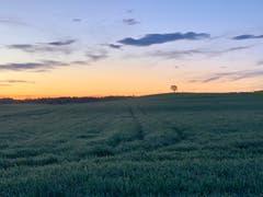 Sonnenaufgang in Alterswilen. (Bild: Reto Schubnell)