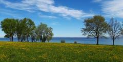 Seeuferlandschaft in Arbon bei Föhnlage. (Bild: Klaus Businger)