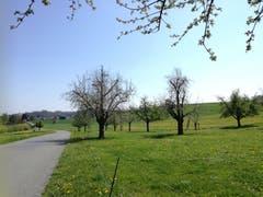 Von Arenenberg nach Ermatingen geht es über Land. (Bild: Marlen Hämmerli)