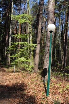 Im Wald ist ein Pfad von zwei Kandelabern eingerahmt: Er führt zu einem Weiher und zum Schloss Eugensberg. (Bild: Marlen Hämmerli)