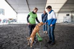 LZ-Redaktor Hugo Bischof (hinten) möchte einen Familienhund anschaffen. Sein Sohn Jim begutachtet den Mischling Chicco. Links im Bild ist die Besitzerin Claudia Bielmann. (Bild: Roger Grütter, 29. April 2019)