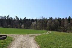 Nach dem Waldweg folgt ein Stück ein Feld - den Burst - entlang. (Bild: Marlen Hämmerli)