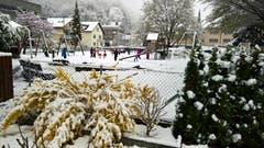 Während der Forsythienstrauch schwere Last trägt, vergnügen sich die Kinder auf dem Spielplatz im Schnee. (Bild: Karl Graf, Stansstad, 4. April 2019)