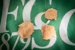 Diese Blätter hat Robert Adolf im vergangenen Herbst im Espenmoos eingesammelt und mit nach Hause genommen. (Bild: Ralph Ribi)